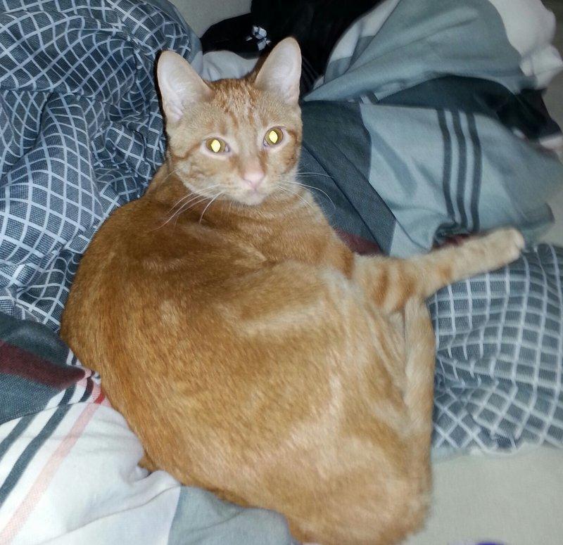 Meet Edie The Cat